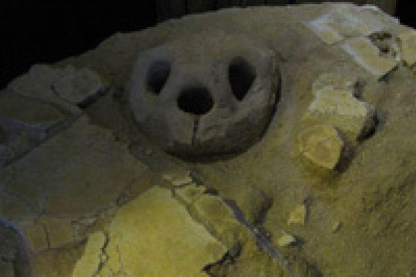Fossiele schildpad