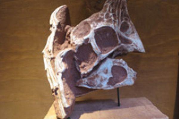 Oviraptor schedel
